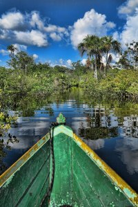 Amazona